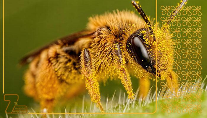 فروشنده عسل