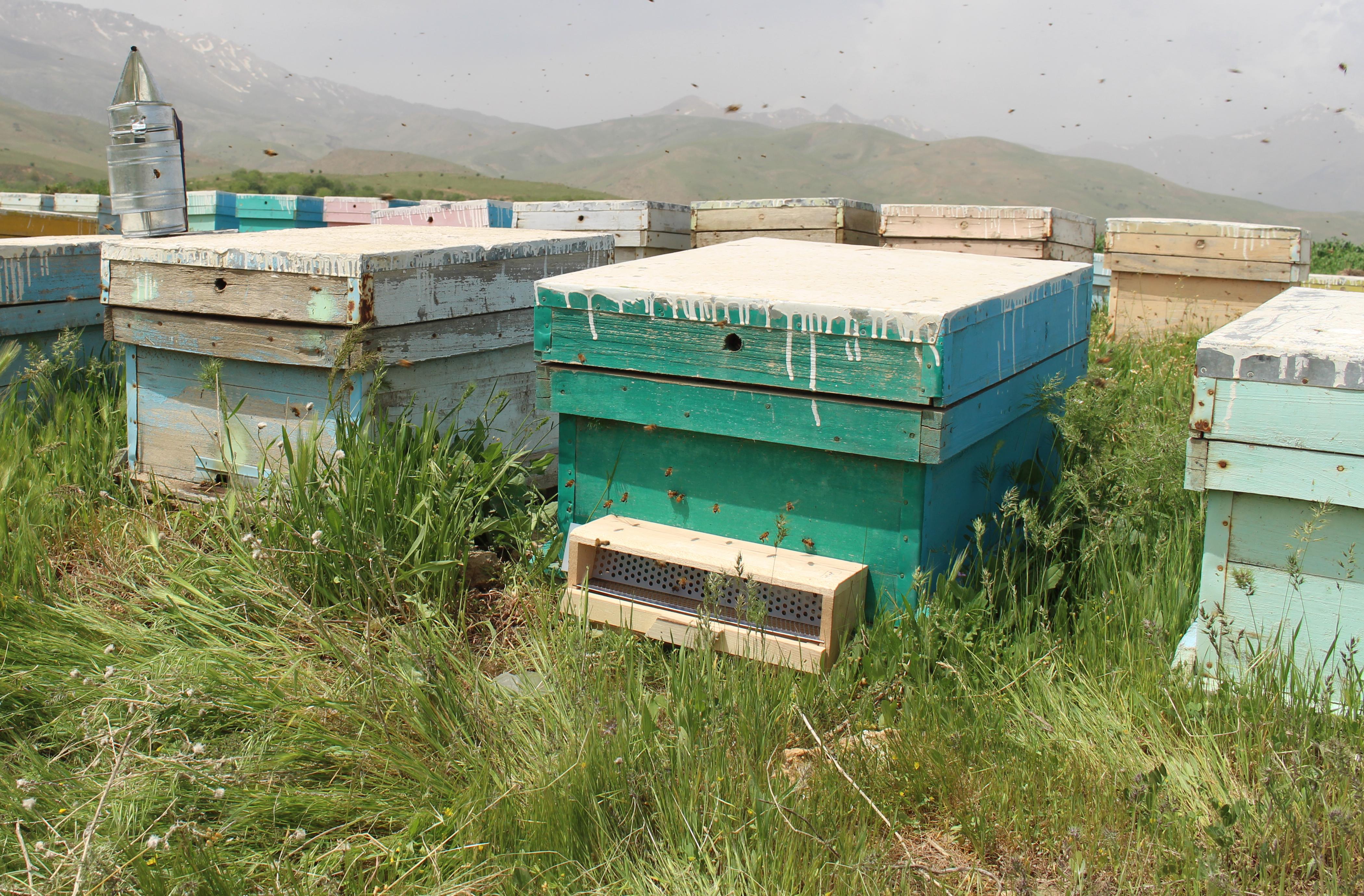 قیمت عسل نجف آباد
