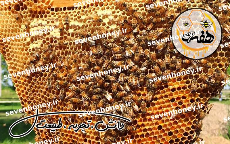 خرید عسل اصل