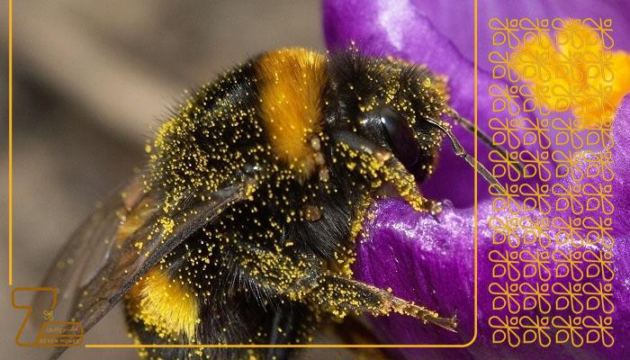 عسل اصل فله ای