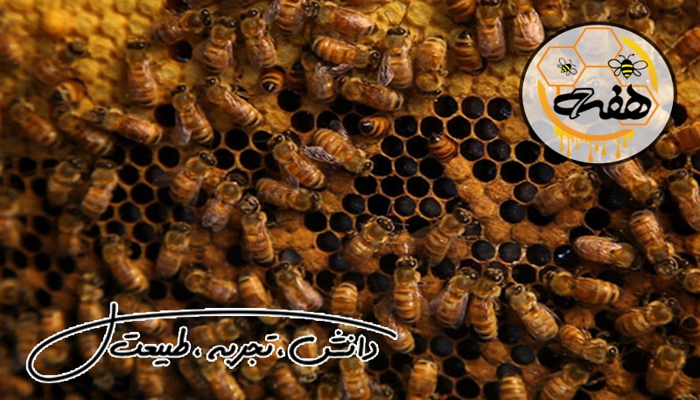 فروش عسل مرغوب
