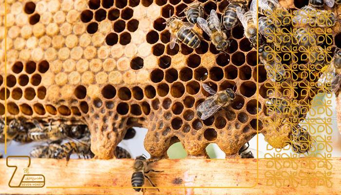 مرکز خرید عسل وحشی